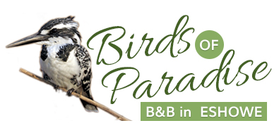 Birds of Paradise B&B in Eshowe